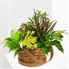 Planta de jardín especial (buena)