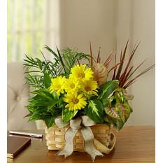Plato Jardín con Flores Frescas (Pequeño)