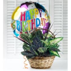 Cumpleaños del plato Jardín
