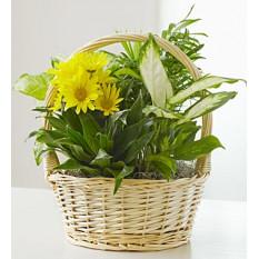 Con amor Plato Jardín y Flores Frescas (Pequeño)
