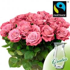 20 rosadas rosas FAIRTRADE en un manojo con florero
