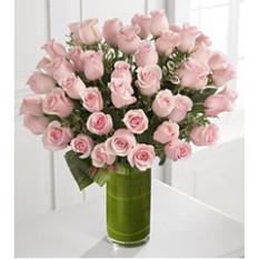 Un beso, una rosa (24 rosas)