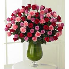 Spring Awakenings (48 Rosas)