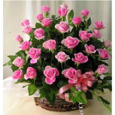 Caricias en el alma (12 rosas)