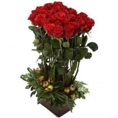 Rosas altas