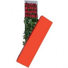 Dos docenas de rosas rojas en caja