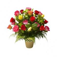Rosas multicolores