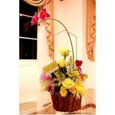 Orchid arreglado