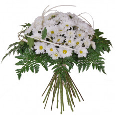 Bouquet of white daisies (Medium)