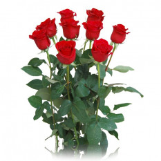 Red Rose Arrangement (6 Roses)